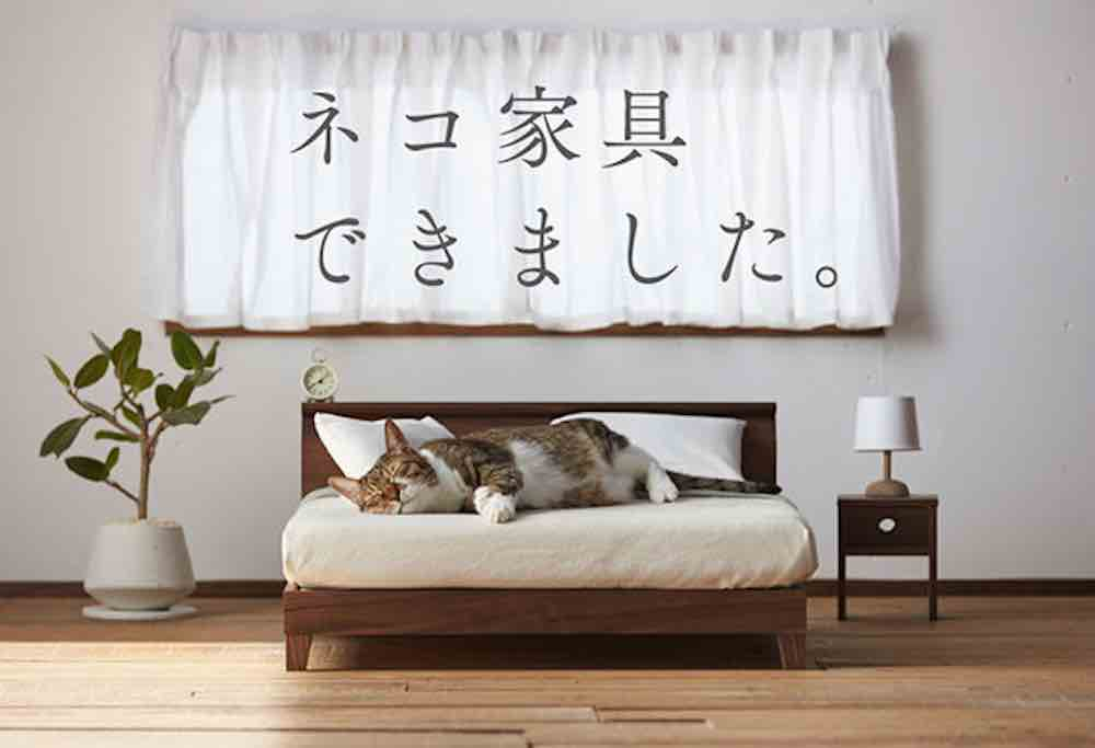 cat on bed okawa
