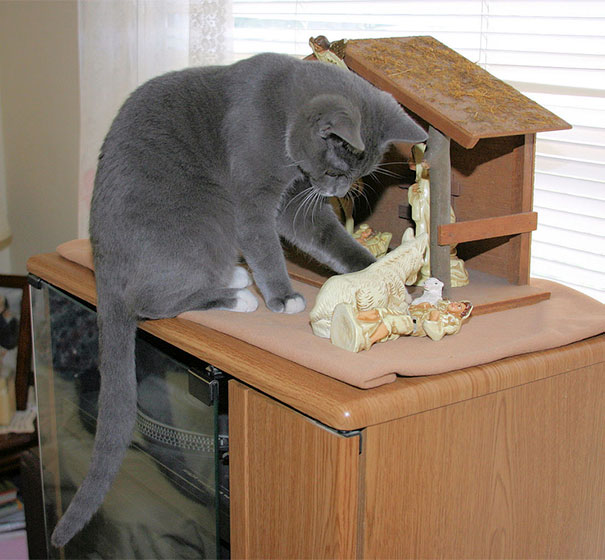cats crashing nativity scenes 18