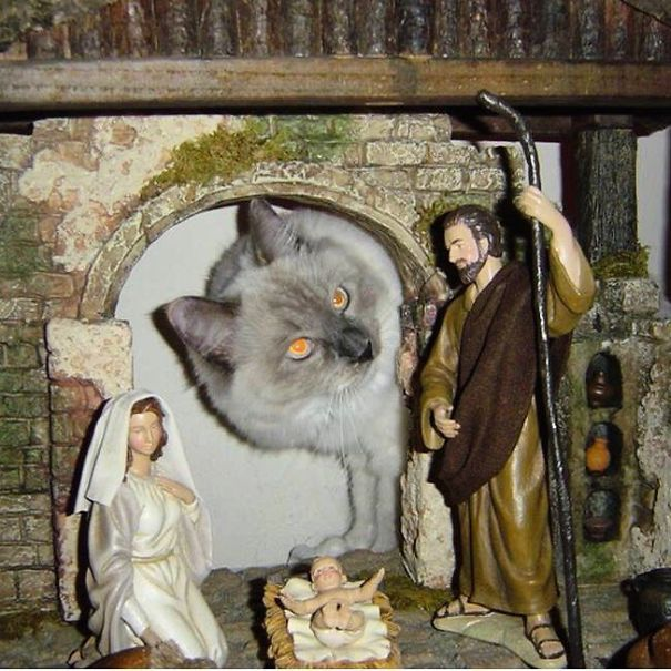 cats crashing nativity scenes 2