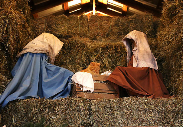 cats crashing nativity scenes 15