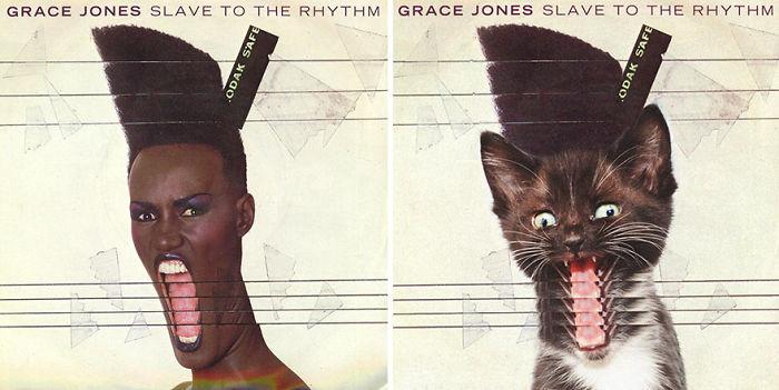 cat album 6