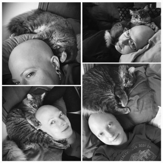 cat warms humans head during chemo 5