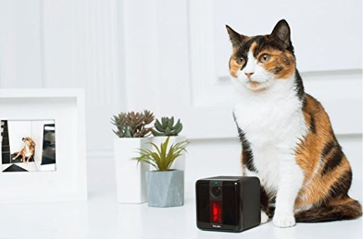 21 christmas gifts for cat lovers