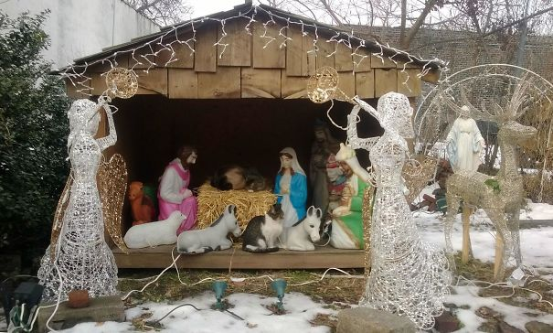 cats crashing nativity scenes 4