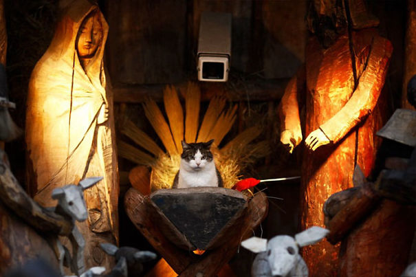 cats crashing nativity scenes 1