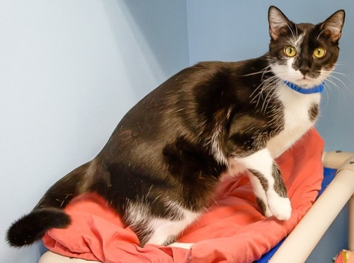 inseparable cats need home for christmas 7