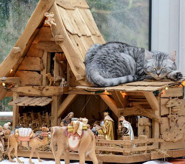 cats crashing nativity scenes 11