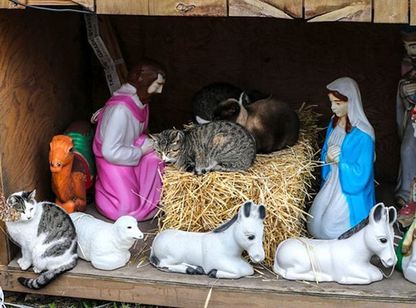 cats crashing nativity scenes 20