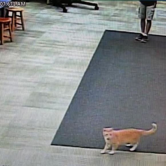 max the library cat 5