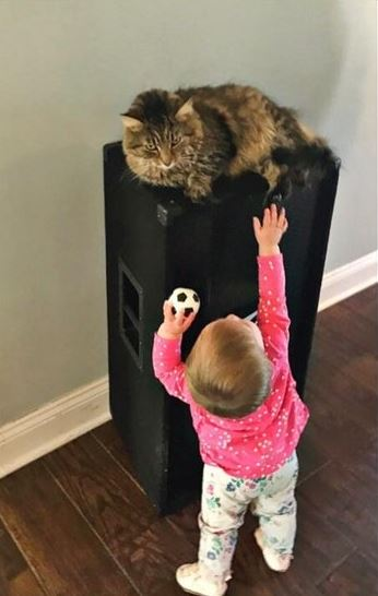 little girl uses cat as pillow 3