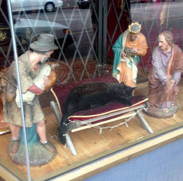 cats crashing nativity scenes 12