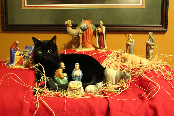 cats crashing nativity scenes 23