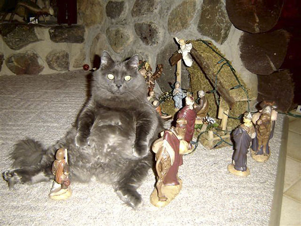 cats crashing nativity scenes 10