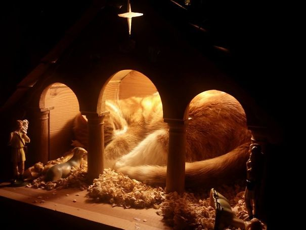cats crashing nativity scenes 5