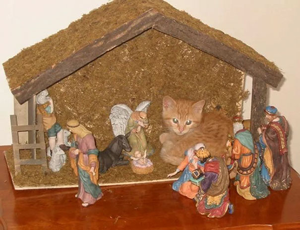 cats crashing nativity scenes 6