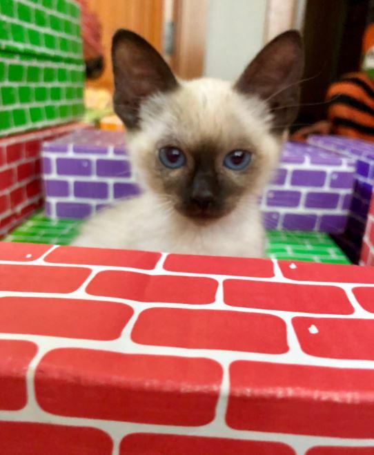 kitten rescued off highway 2