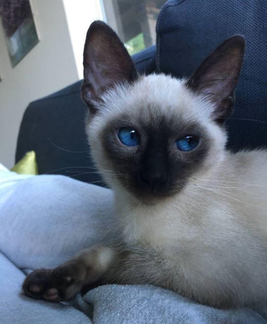 kitten rescued off highway 4