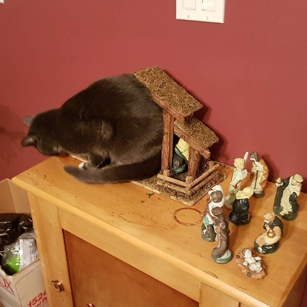 cats crashing nativity scenes 24
