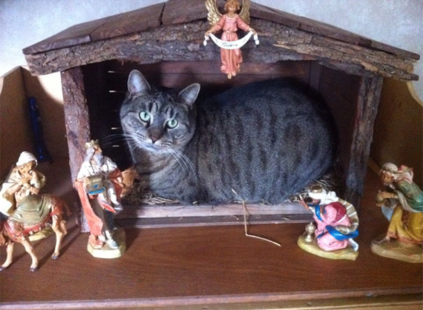 cats crashing nativity scenes 13