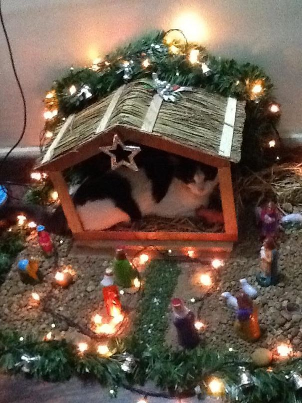 cats crashing nativity scenes 14