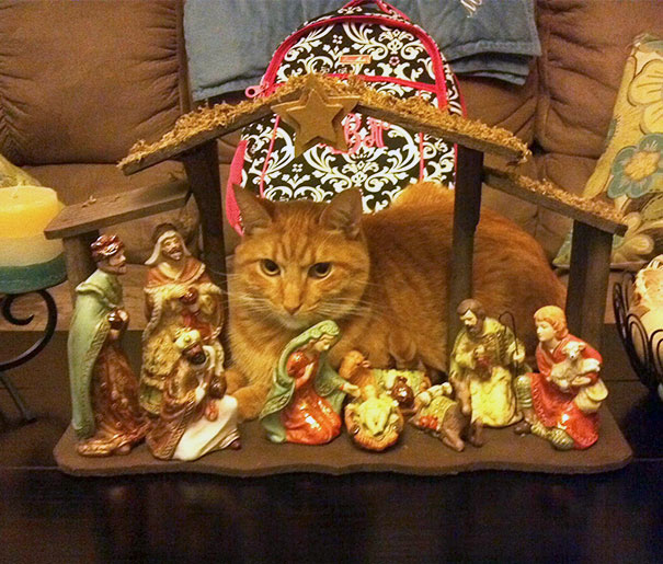 cats crashing nativity scenes 17