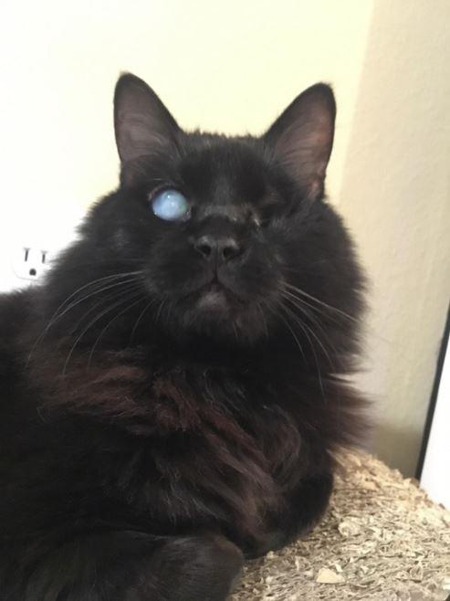 cat pen paws 2