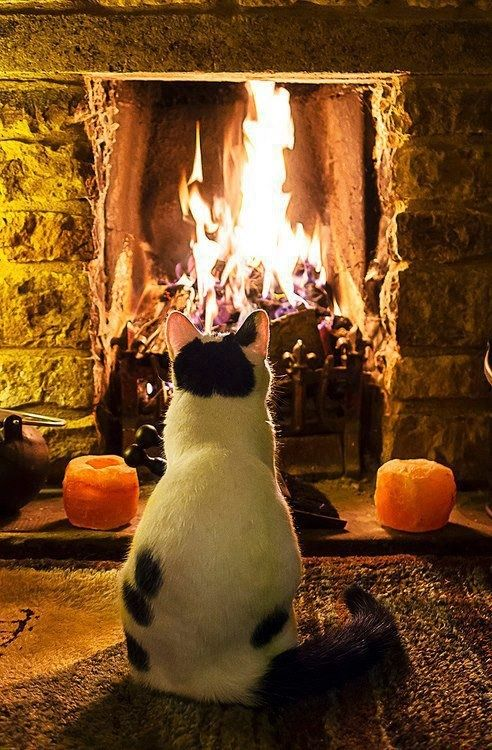 cat relaxing by fire 3