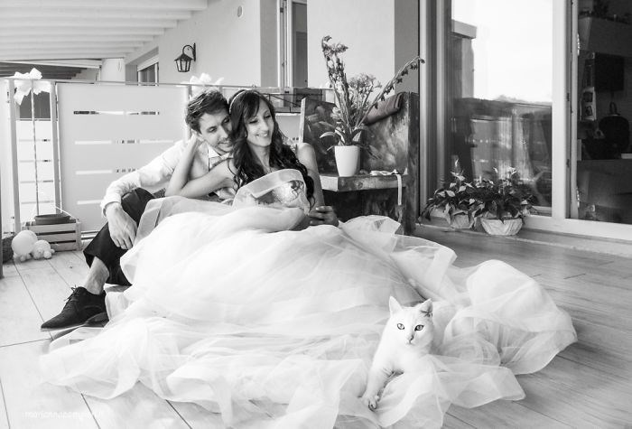 wedding photos with cats 1