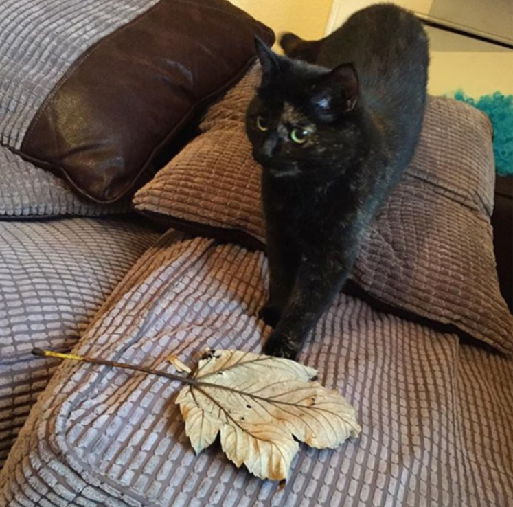cat brings her human a leaf every morning 3