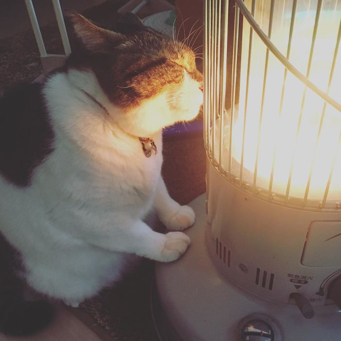 cat falls in love with space heater 3