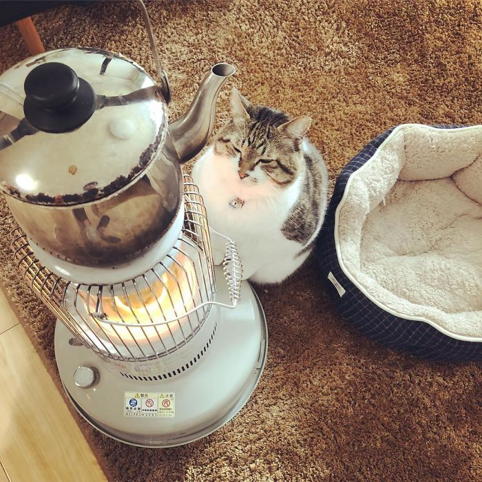 cat falls in love with space heater 6