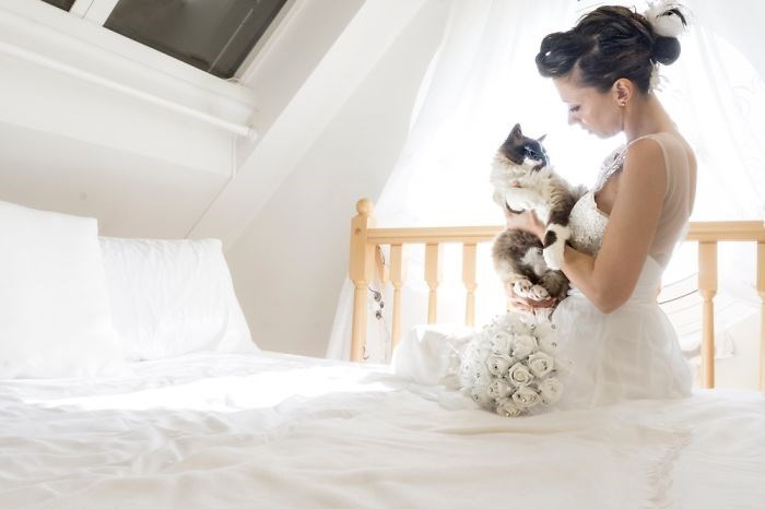 wedding photos with cats 8