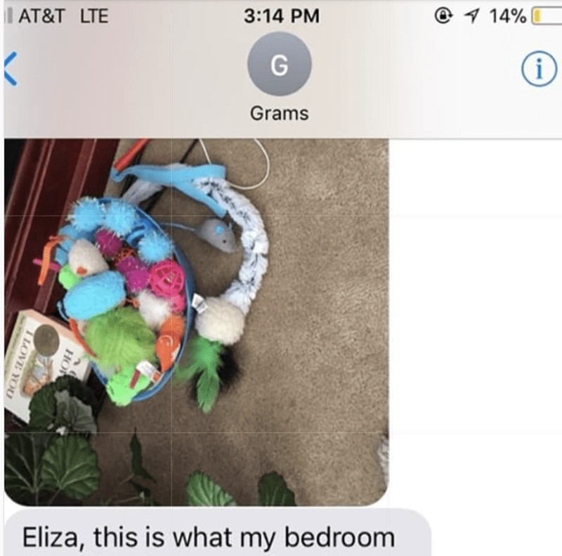 grandma texts pictures of her cat 5