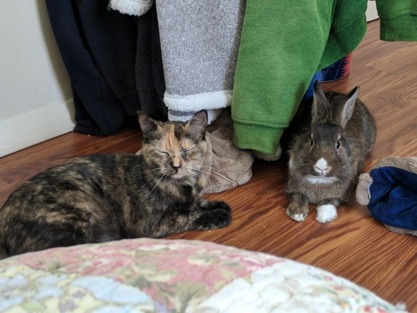 cat and therapy bunny 3