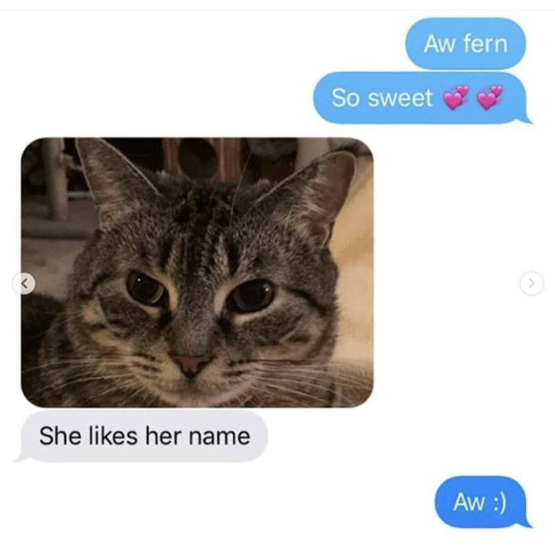 grandma texts pictures of her cat 4