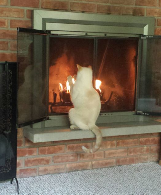 cat relaxing by fire 8