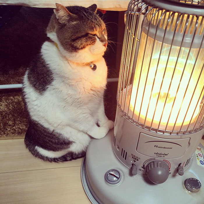 cat falls in love with space heater 1