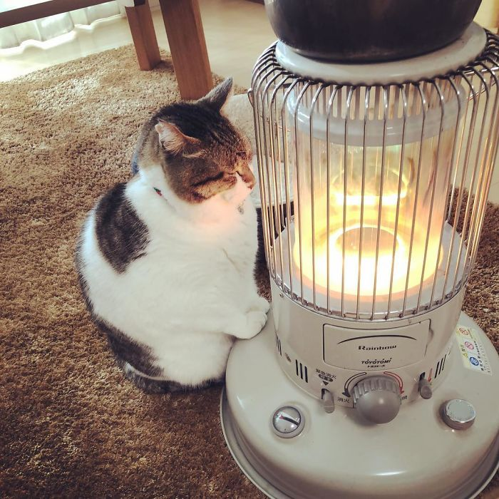 cat falls in love with space heater 8