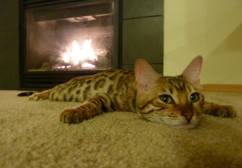cat relaxing by fire 6