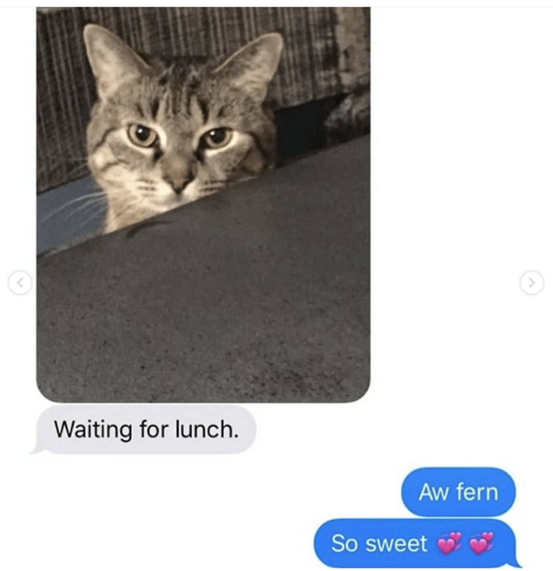 grandma texts pictures of her cat 3
