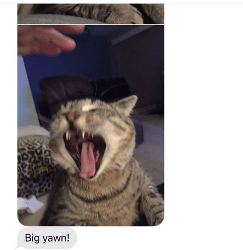 grandma texts pictures of her cat 7