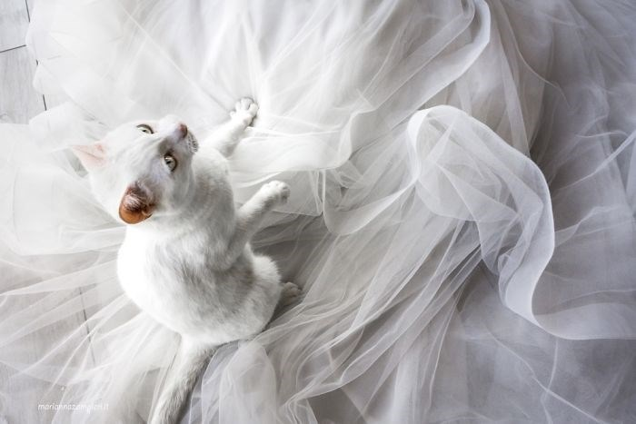 wedding photos with cats 5
