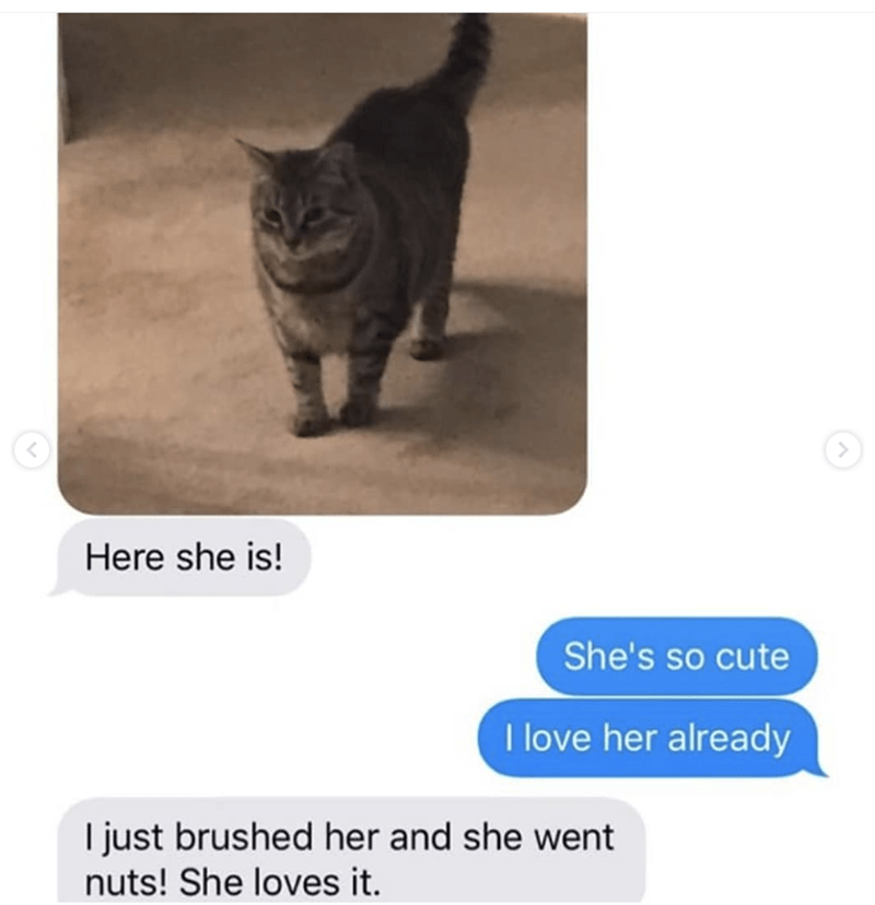 grandma texts pictures of her cat 2