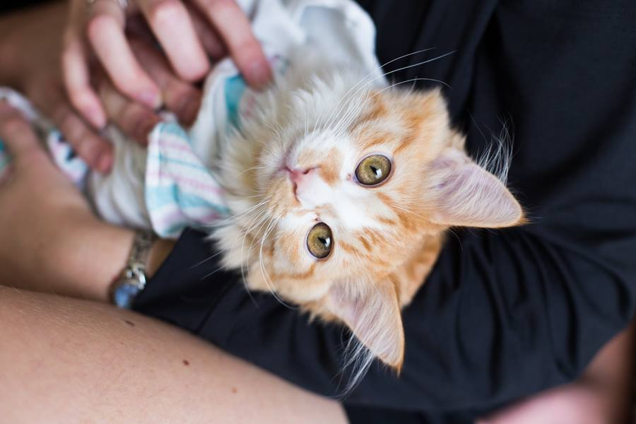 couple announces new baby on facebook with kitten photos 6