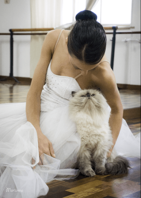 wedding photos with cats 7