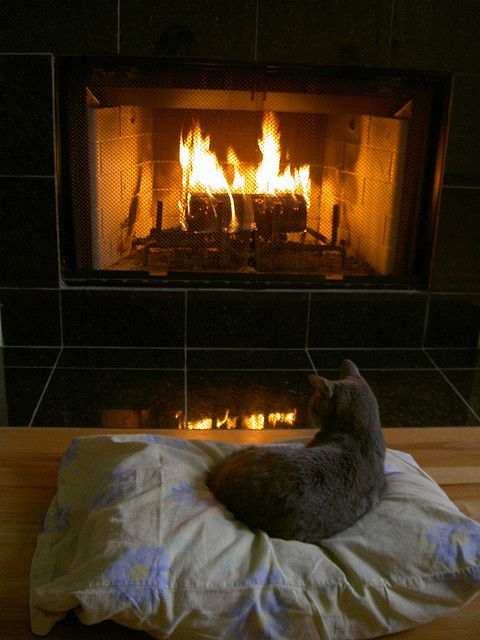 cat relaxing by fire 2