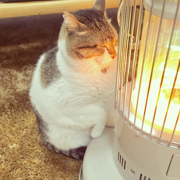 cat falls in love with space heater 5