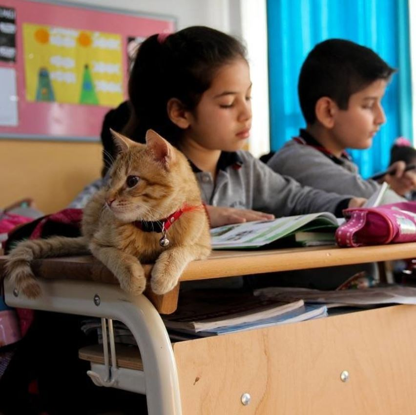 cat attends school in turkey 6
