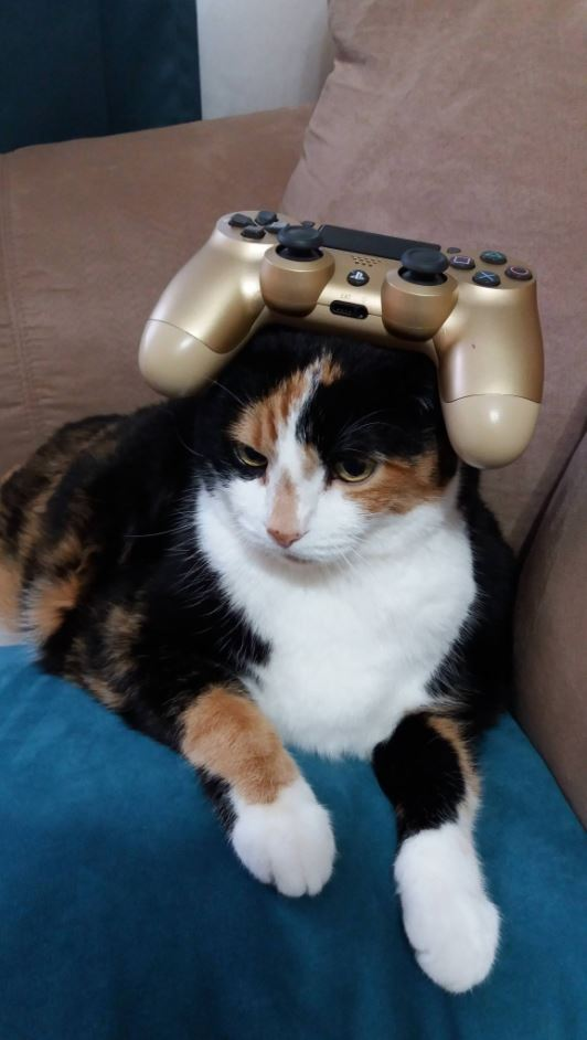 balancing stuff on cat ps4 controller