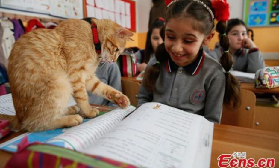 cat attends school in turkey 3